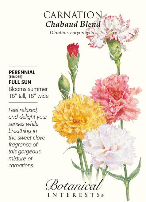 Chabaud Carnation Seeds 350 Mg Perennial Carnation Flower Meaning Carnations Flower Meanings