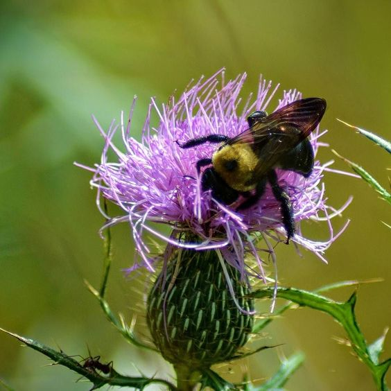 """""""I love you flower."""" Says the bee. by zemanmary"""
