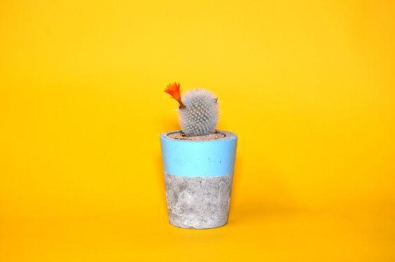 Concrete Planter, Cactus/ Succulent Plant Pot, Handmade, Pastel Baby Blue- Includes Cactus or Succulent https://www.etsy.com/uk/shop/PrickCactusShop