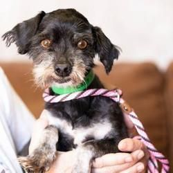 Available Pets At National Mill Dog Rescue In Colorado Springs