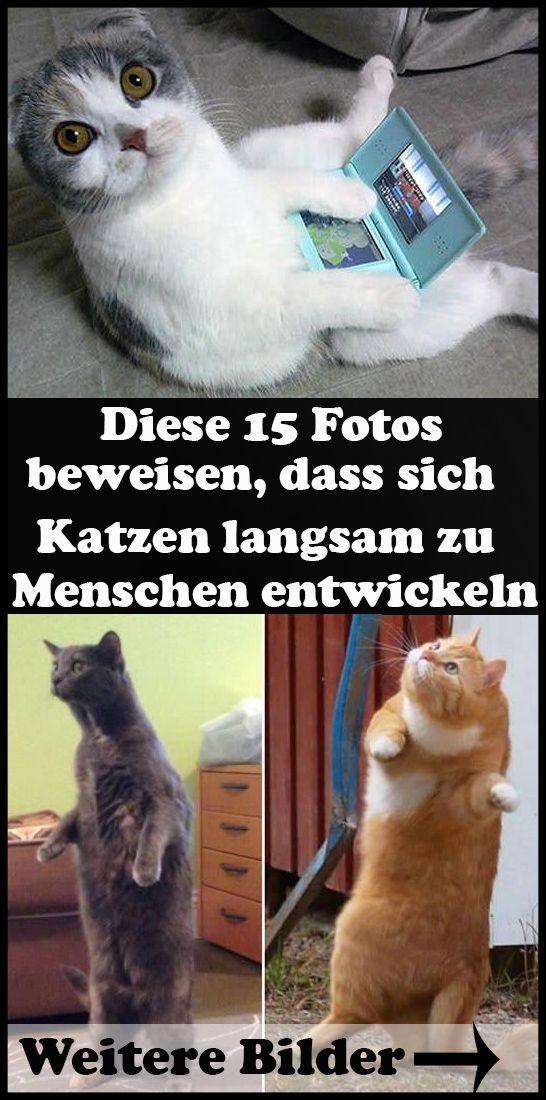 12 Lustige Katzen Snapchats Die Dich Zum Lachen Bringen 12