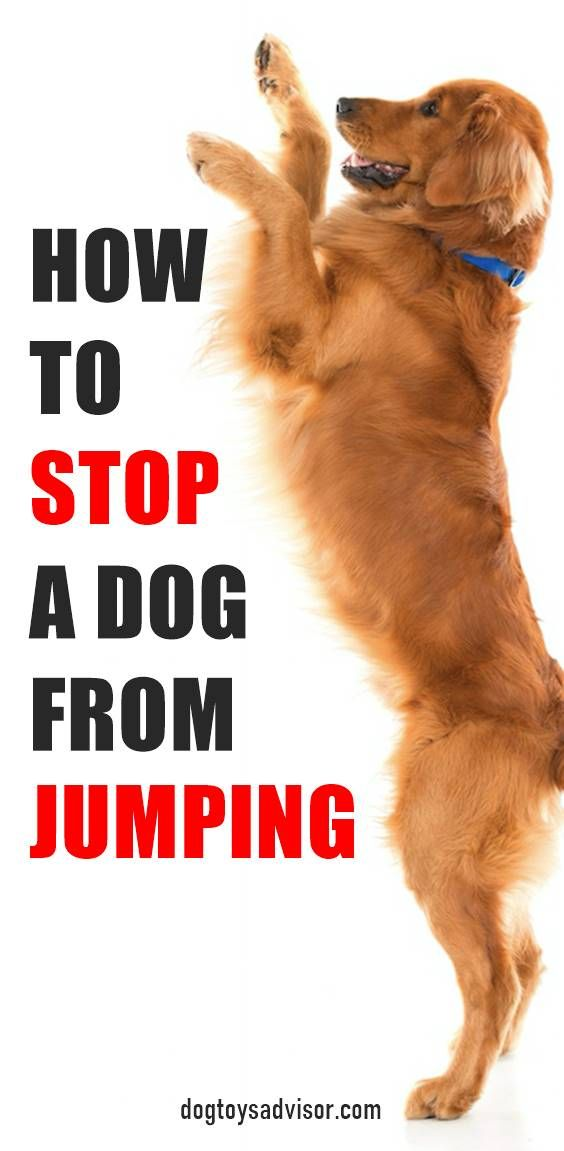 Pin By Tammy Storms On Puppyhood Raising A Golden Retriever Dog