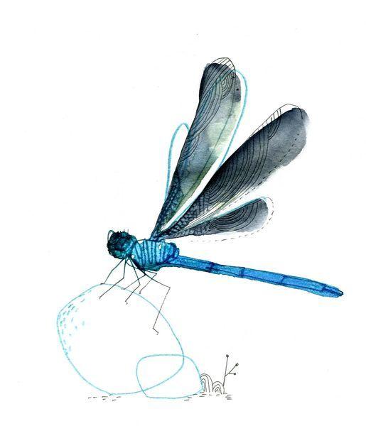 libellule, aquarelle, cécile hudrisier
