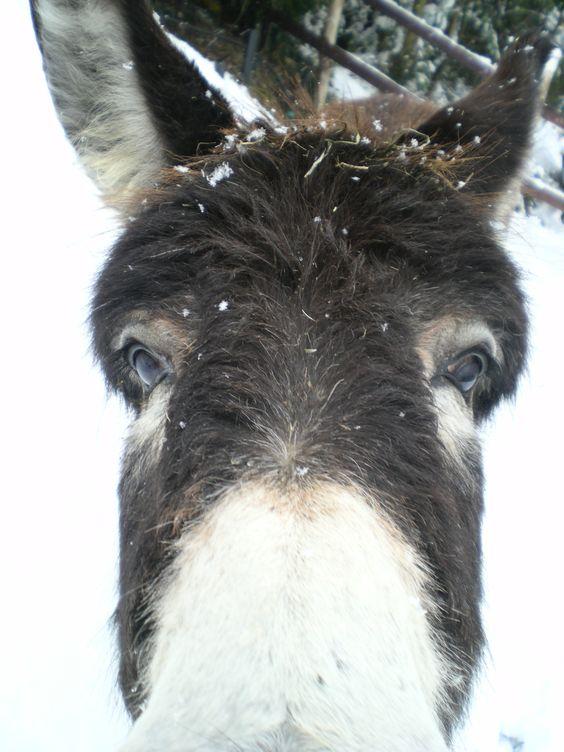 Zenzi scopre la neve...