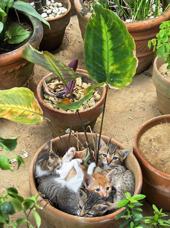 Kittens cuddling in a plant pot. Plants, cats and kittens.: