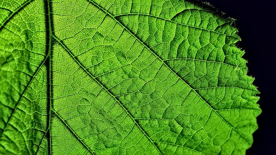 the landscape on a leaf by GOLDFOCUS