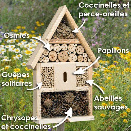 Conseils placement + description insectes