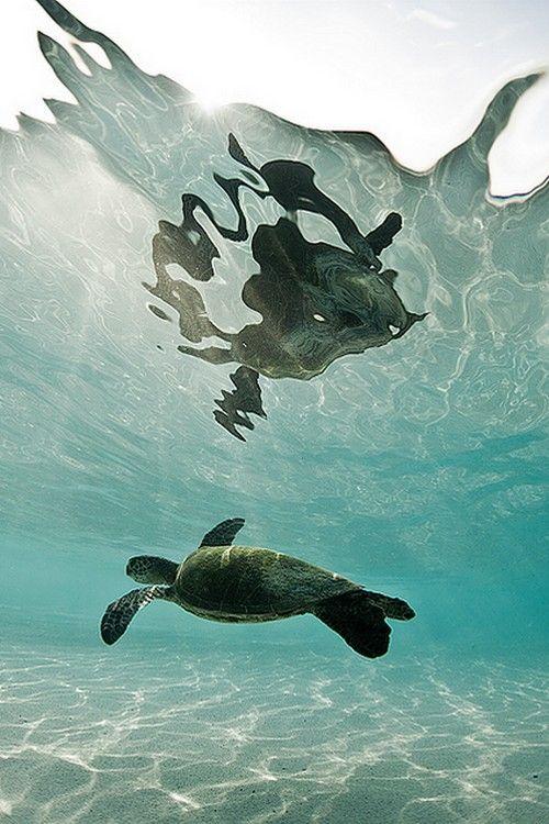 Reflejo de una tortuga bajo el mar