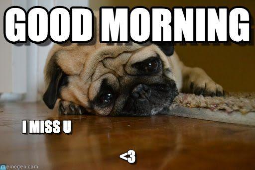 80 Good Morning Memes To Kickstart Your Day Sayingimages Com Good Morning Meme Good Morning Funny Good Morning Quotes
