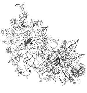 Flores do crisântemo coloração página