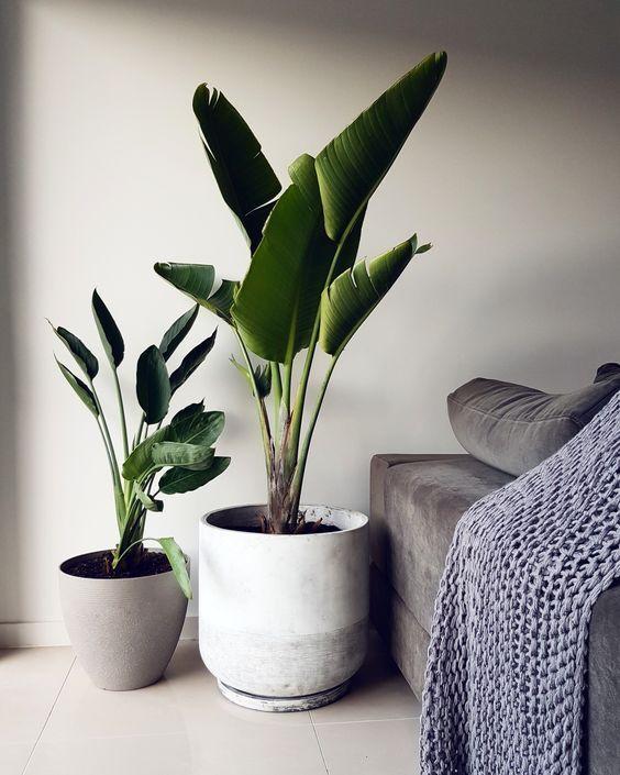 鉢カバー インテリア コーディネート例 観葉植物 バランス