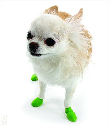 PawZ Dog Boots - 12pk