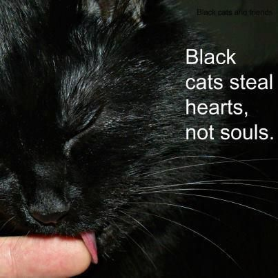 I love black cats   ...........click here to find out more     http://googydog.com