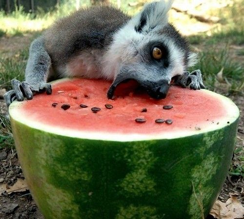There's just something about watermelon.