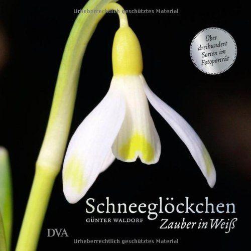 Schneeglöckchen: Zauber in Weiß. - Über dreihundert Sorten im Fotoporträt -: Amazon.de: Günter Waldorf, Oliver Kipp: Bücher