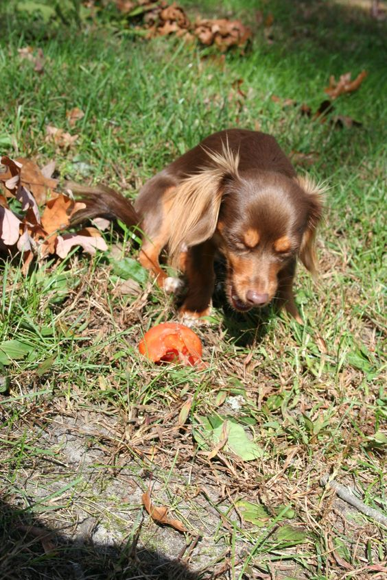 Axl loves stealing from the garden