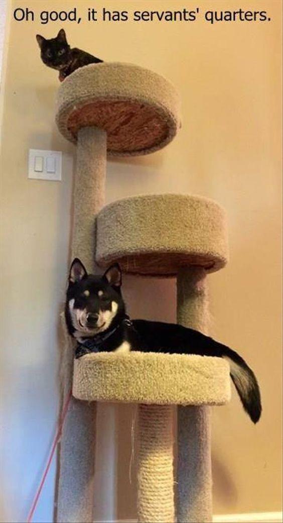 Eu acho que vi um gatinho...