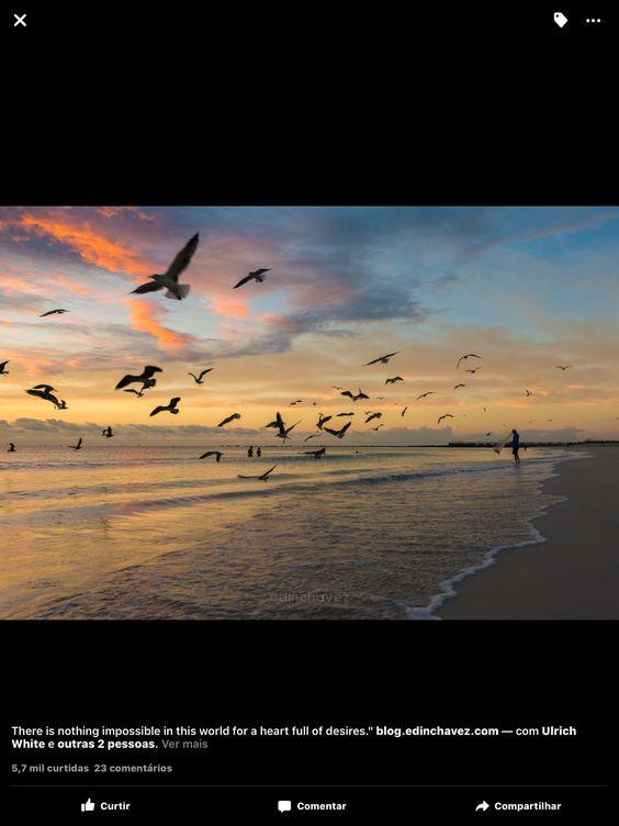 Praia e pássaros
