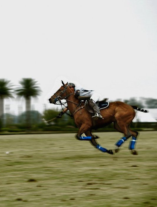 BBC - Travel - Playing polo in Buenos Aires