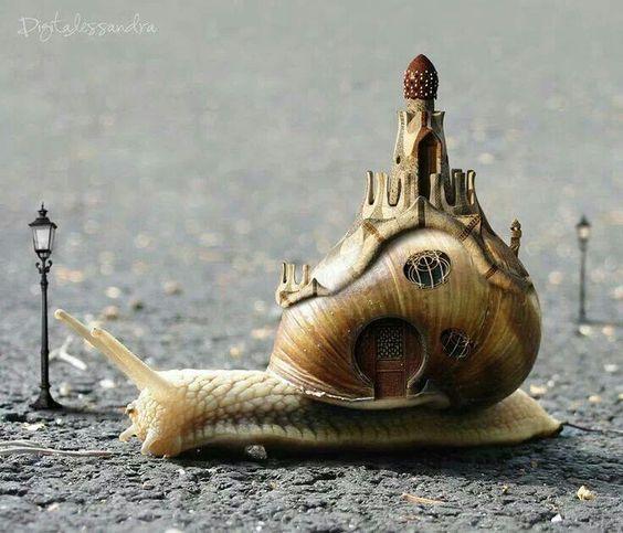 Snail palace