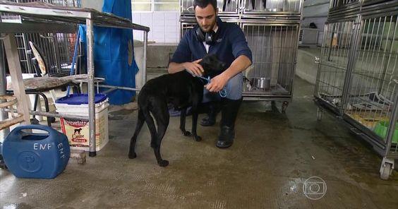 Especialistas falam sobre a relação dos humanos com os cães