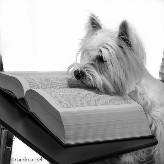 Do Not Disturb. I reading an important page on the wonders of the Westies: