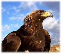 giant roc - djinn battle mount (golden eagle) large enough to carry people: