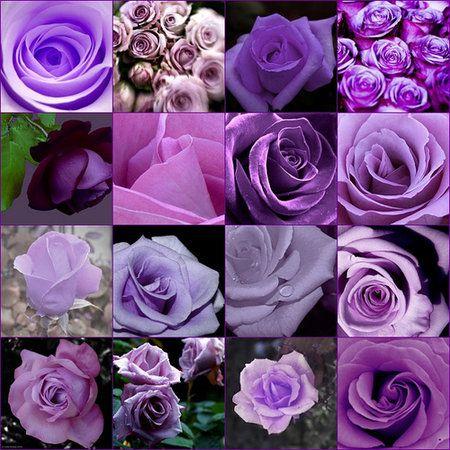 Purple roses!