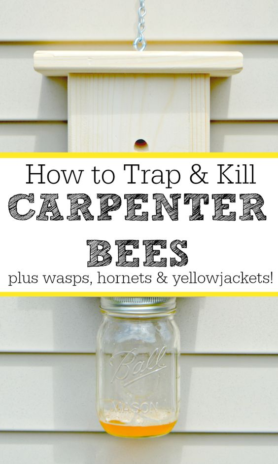How To Kill Wasps Naturally | Autos Post