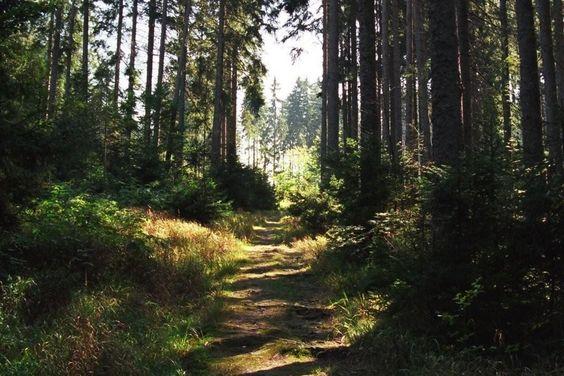 Waldspaziergänge: Sattes Grün, frische Luft, Ruhe: Ein Wald- spaziergang ist viel mehr als nur reine Entspannung. Forscher finden stets neue Erklärungen dafür, warum Ausflüge im Wald sich positiv auf Herz, Immunsystem und Psyche auswirken. | SPIEGEL ONLINE