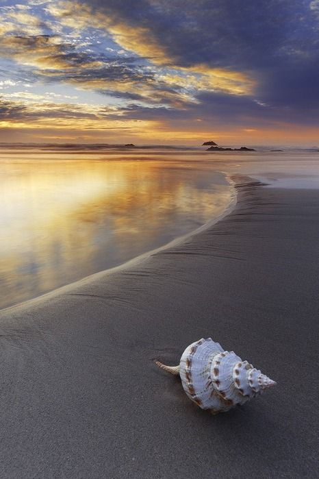 ===Con conchas de la playa=== C17bb5b2c64d4f19565b60c672633c2b