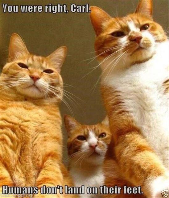 Keep Calm Fridge Magnet Cat Crazy Cat Man