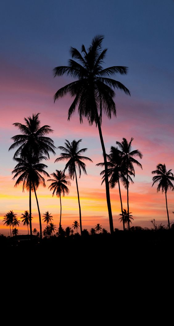 Palms sunset iPhone wallpaper  Iphone wallpapers  Pinterest  Style, iPhone wallpapers and Trees