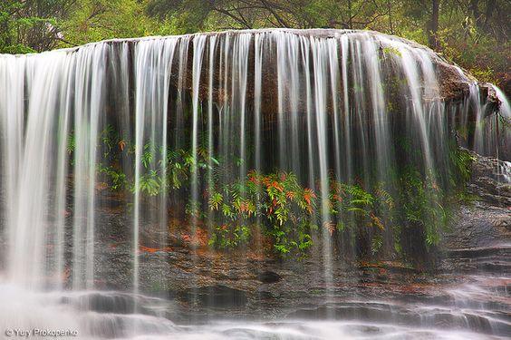 Weeping Rock Waterfall, Blue Mountains, Australia by Yury Prokopenko