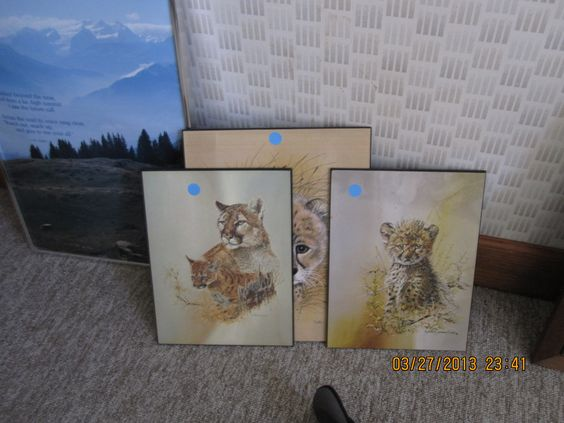 wild cats on wood