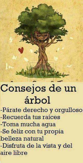 La sabiduría de un árbol
