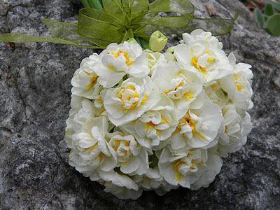 Bridal Crown Narcissus