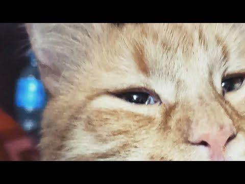 قطتي دايمآ كأنها بتعيط دة شكلها الطبيعي ريأكشن قالوا زمان دنيا غنية غرورة Youtube Cats Animals