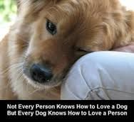 unconditional love animals