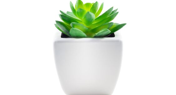 Succulents are wonderfully simple to care for, plus they're easy to propagate.