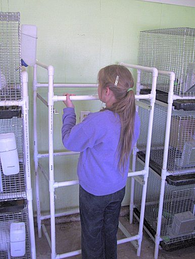 How to build a rack for stacking rabbit cages by Good Hare Daze Rabbitry