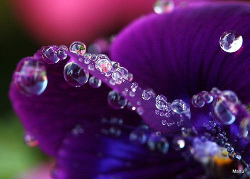 : Color Crush Purple, Color Me Purple, Water Drops, Drops Rain, Purple Passion, Dew Drop, Color Purple, Rain Drops, Purple Flower