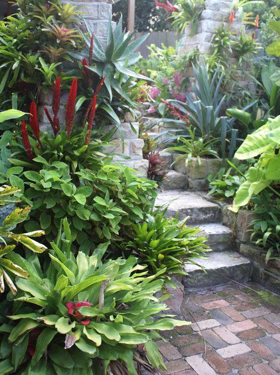Australia gardens and ferns on pinterest for Small gardens australia