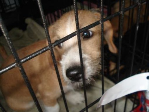 Inverness Fl Terrier Unknown Type Small Meet Karl A Pet For Adoption Honden Adoptie