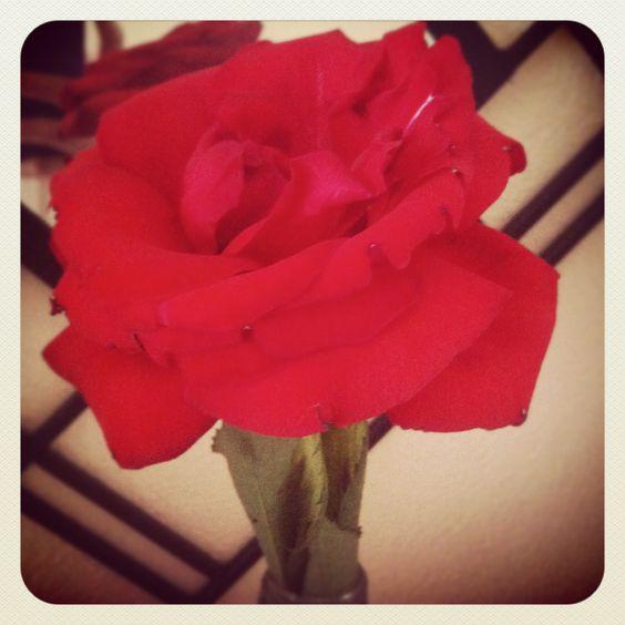 Flores rosas eternas
