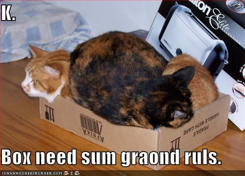 Two layer sleeping cats in a box