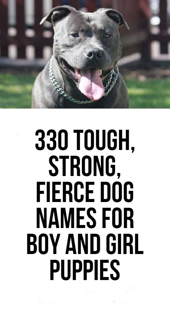 11++ Strong male dog names unique info