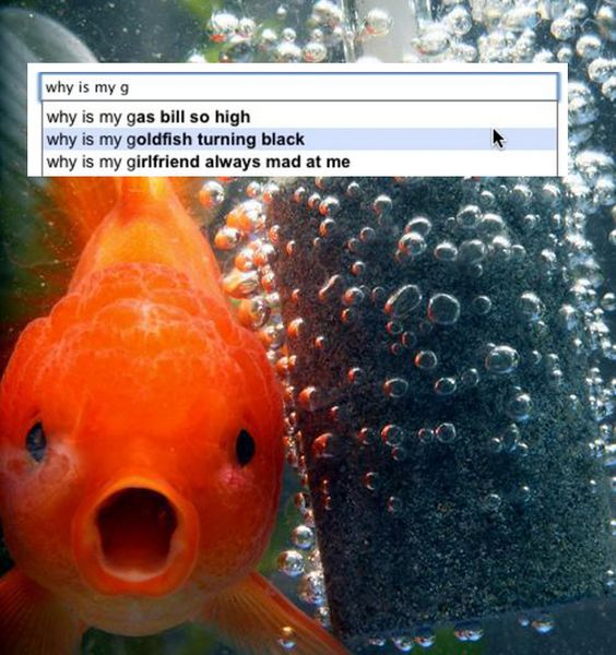 The deepest anxieties of a colorblind child. | The 19 Dumbest Things That Google Is Forced ToSuggest