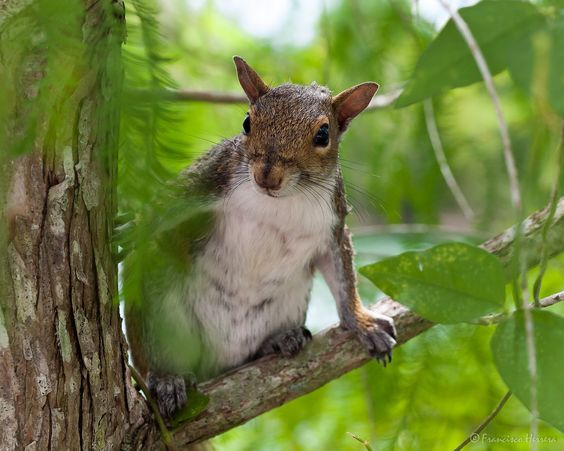 https://flic.kr/p/w2TCdS | Squirrel / Ardilla | Zoo Miami
