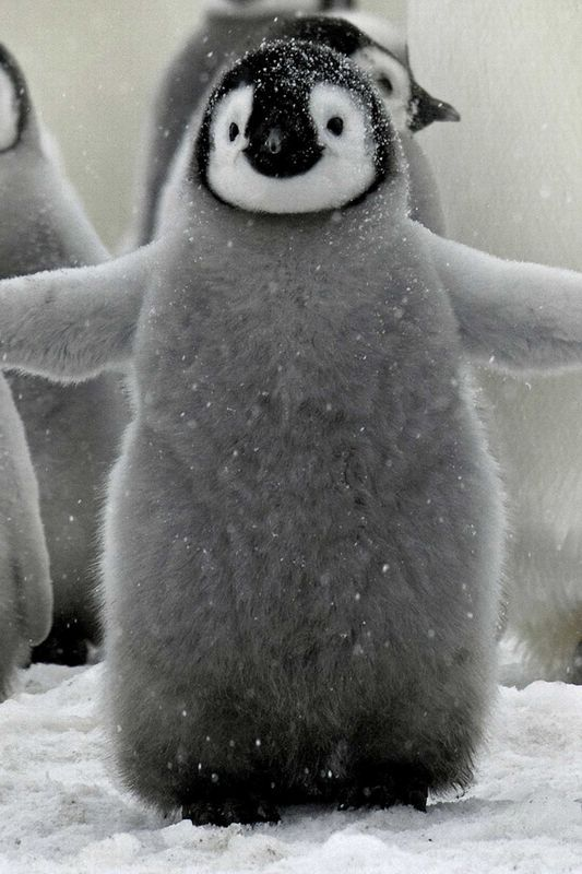 A fluffy baby penguin!